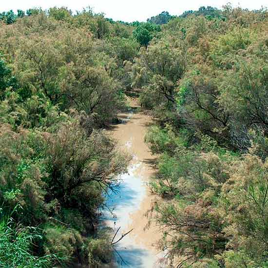 Curso medio del Río Corbones