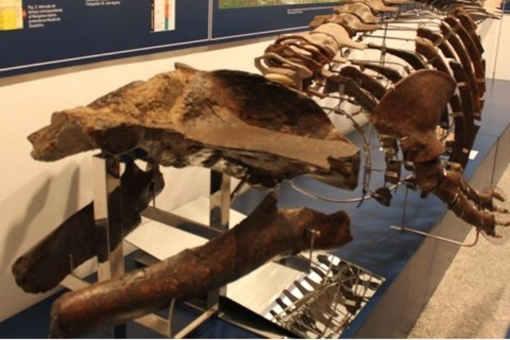 Es el ejemplar de ballena más completo y mejor conservado del Mesinense español, de 6,38 millones de años. Fue encontrado cerca del molino de La Aceña en 1970.
